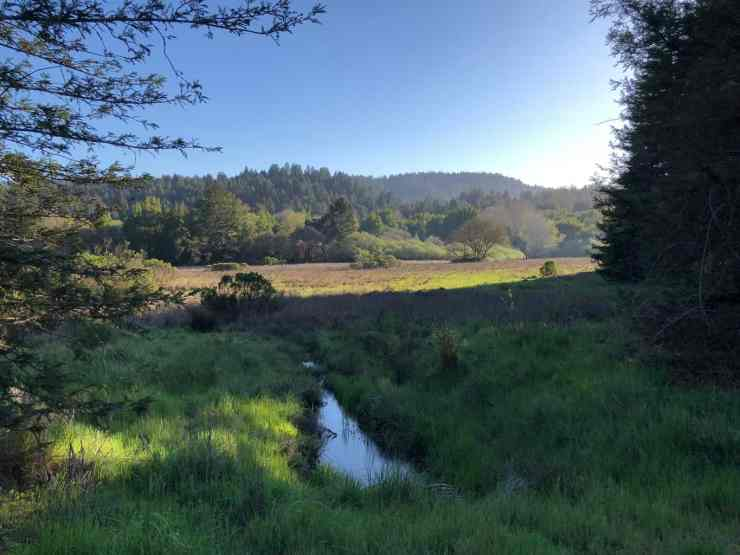 Evening in Henry Cowell