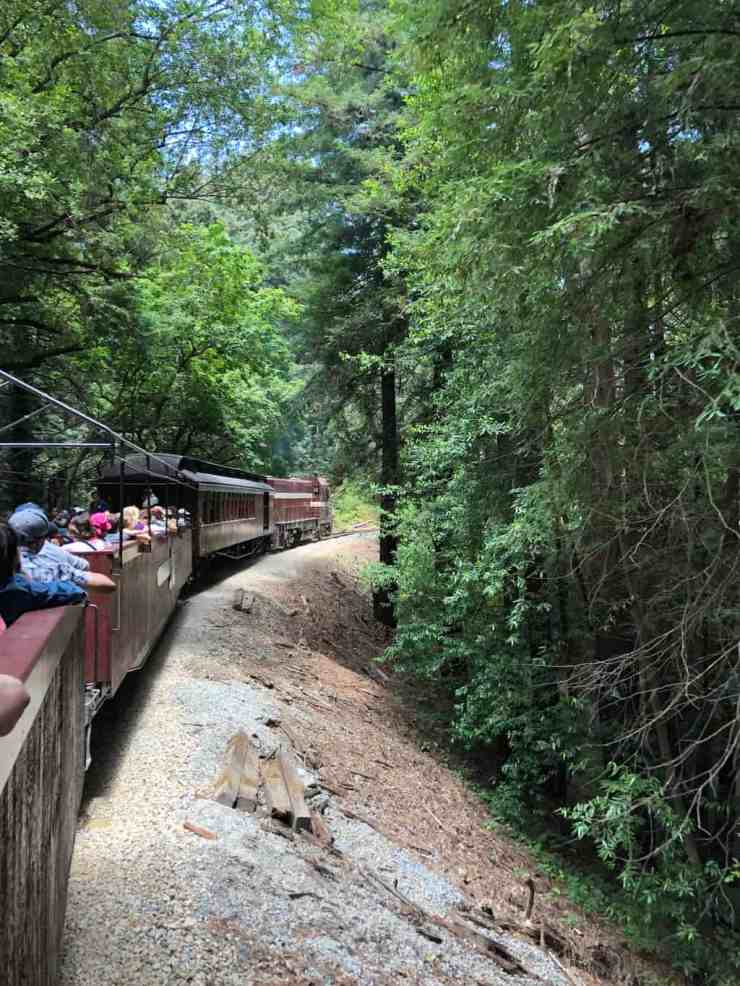 old train going through the redwood trees with passengers