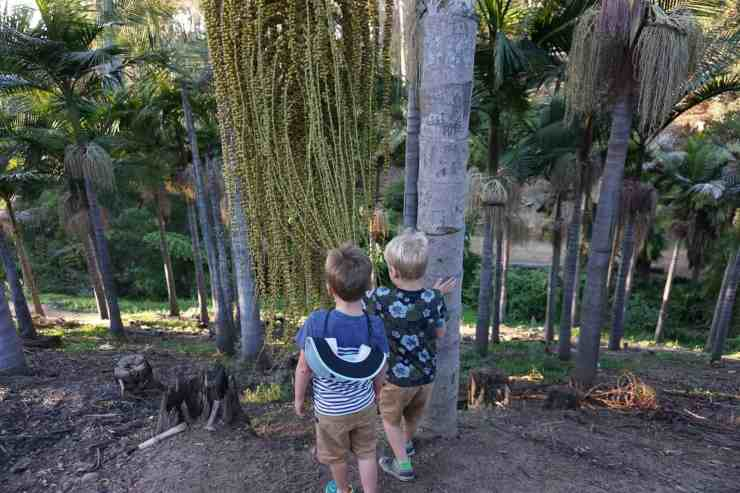 Two boys looking down a hillside of palm trees