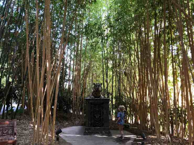 little boy looking at a tiger statue surrounded by tall bamboo