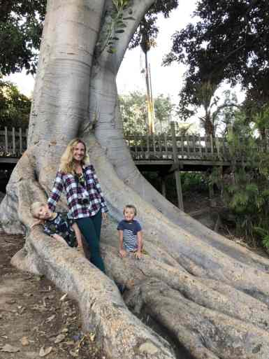 mom with two small boys posing for a picture amongst large tree roots