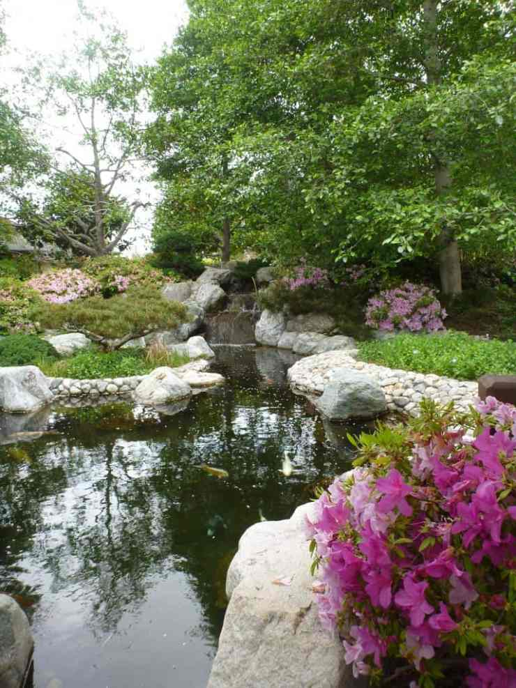 A pond in a japanese garden in Balboa Park with large boulders and koi fish
