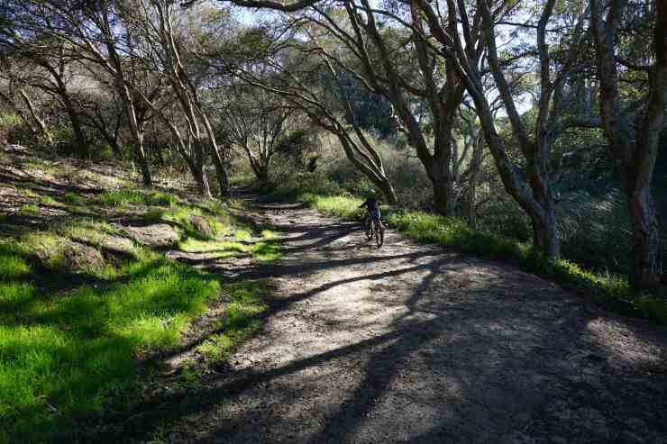 Boy riding his bike on a dirt path under oak trees in Twin Lakes State Park in Santa Cruz CA