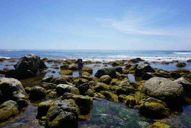little boy standing on rocks in the tide pools in Cabrillo National Monument in Point Loma, CA