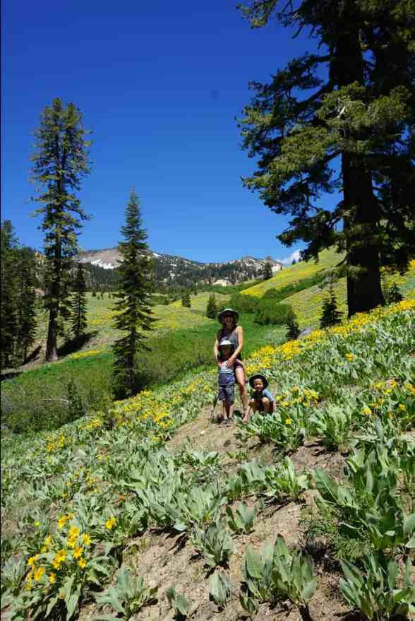 woman standing with two young boy in a field of flowers in Lassen National Park.