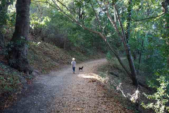 Boy walking a dog on a trail in Pogonip County Park in Santa Cruz CA.