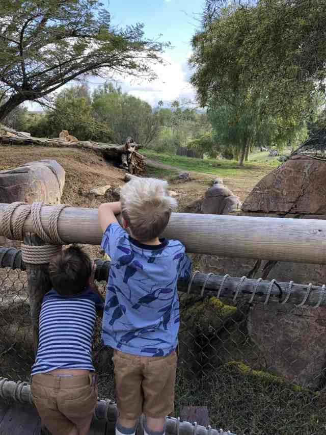 kids watching lion at Safari Park in San Diego