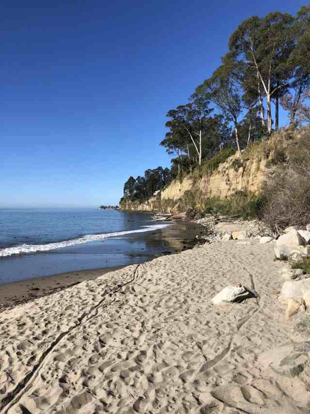 new brighton state beach in santa cruz has camping and allows dogs