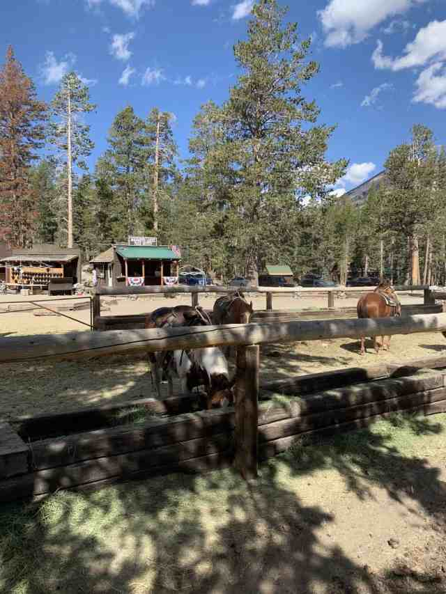 horseback riding is another thing to do in mammoth lakes when camping