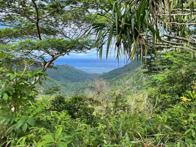 top of 3 coconuts hike moorea. hiking in moorea is a free things to do