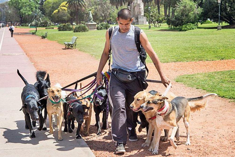La Municipalidad inscribirá y capacitará a paseadores de perros