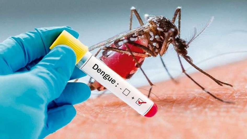 Jóvenes, scouts y los investigadores del Conicet realizarán un operativo contra el dengue en Orán