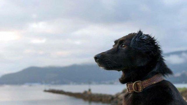Murió Comando, el perro que esperaba en el muelle a su dueña tripulante del ARA