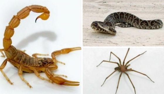 Las altas temperaturas son propicias para la aparición de alacranes, arañas y serpientes