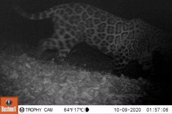 El Parque Provincial Laguna Pintascayo registró 8 especies de animales en buen estado