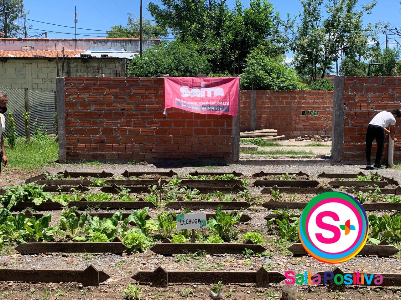 Vecinos de villa Asunción cosecharon variedad de vegetales de la huerta comunitaria