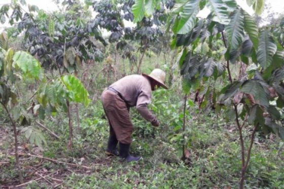 Presentaron un programa piloto de capacitación agroecológica para la comunidad Wichí de Pacará