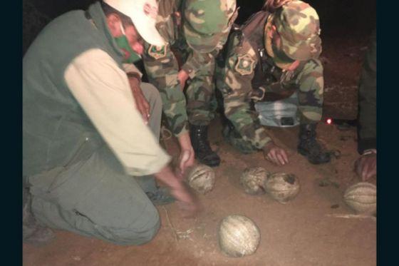 Guardaparques y Policía lograron rescatar 38 quirquinchos y devolverlos a su ambiente