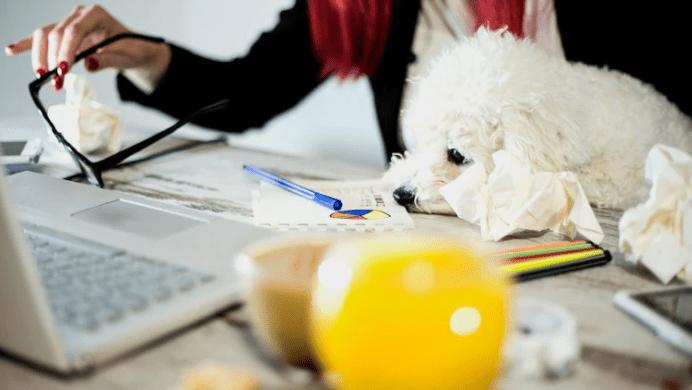 Nueva tendencia: las empresas que permiten llevar el perro al trabajo