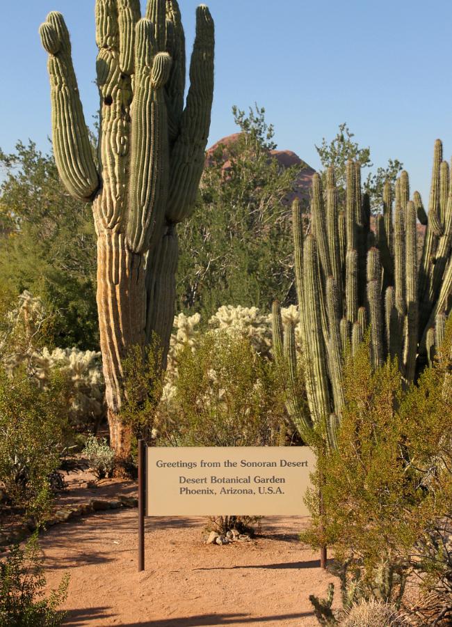 Phoenix, Christmas, Desert Botanical Garden