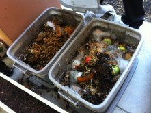 Second grade composting project.