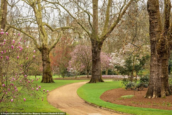 The lawn has to be mown weekly as soon as the grass starts growing in the spring to keep it at the right height, while the edges are painstakingly clipped to add precision. Pictured: A curving path in the garden which leads to the rose garden