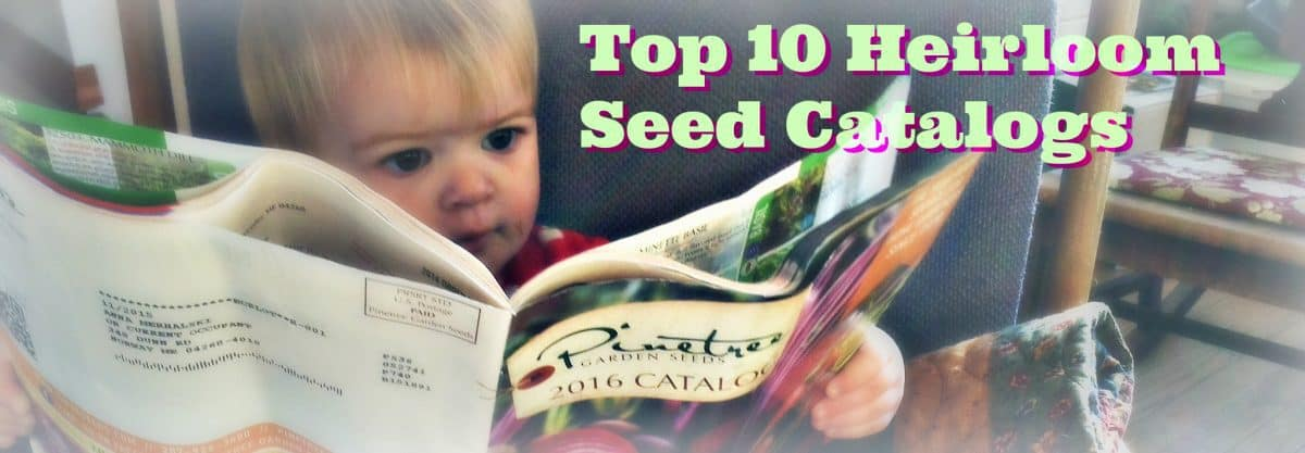 SEed Catalog Banner