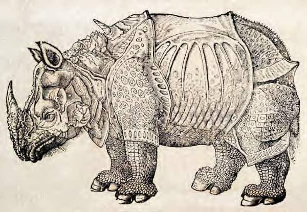 Rhinoceros_woodcut
