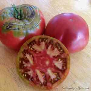 Cherokee Purple Heriloom Tomato