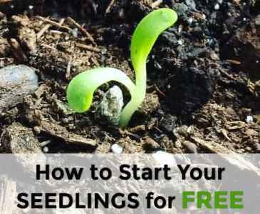 how to start your seedlings for free