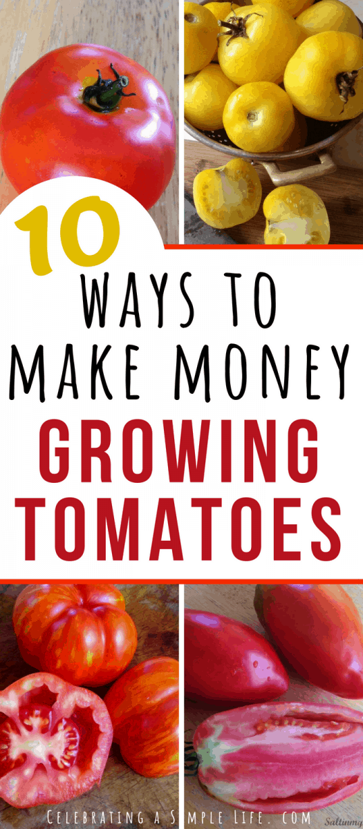 Great list of 10 ways to make extra money growing tomatoes