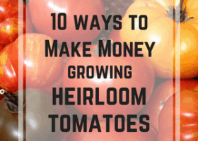 10 Ways to Make Money Growing Heirloom Tomatoes