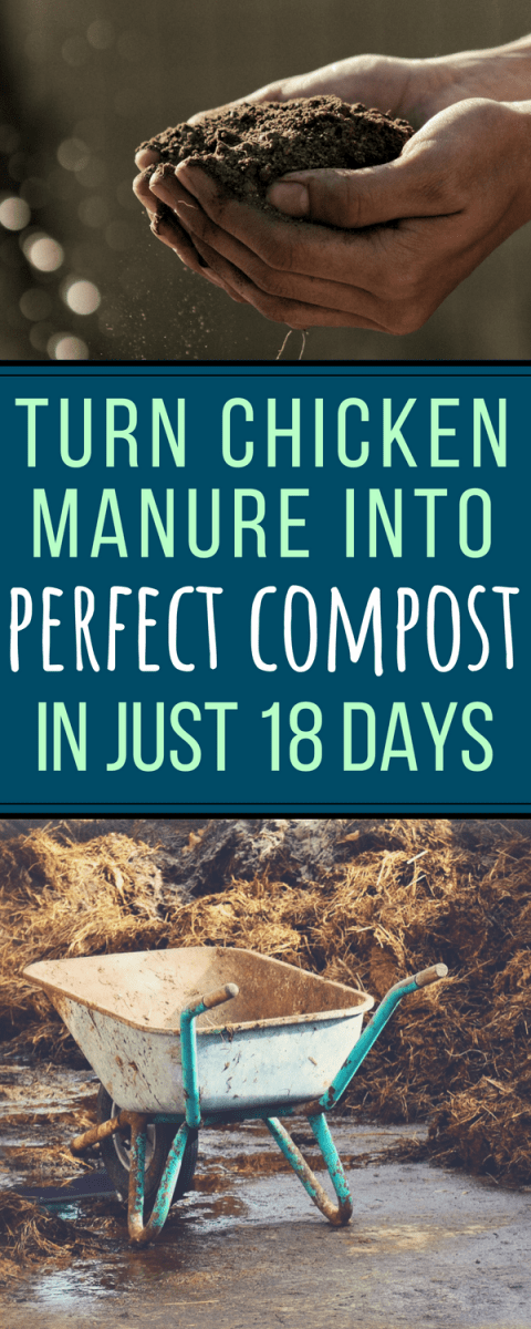 Did you know you can compost chicken manure into good, garden-ready black gold...in just 18 days? Here's how!