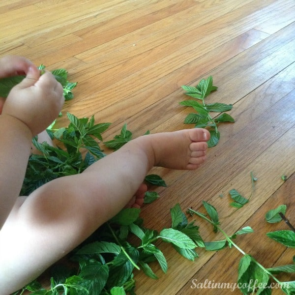 how to make your own mint extract