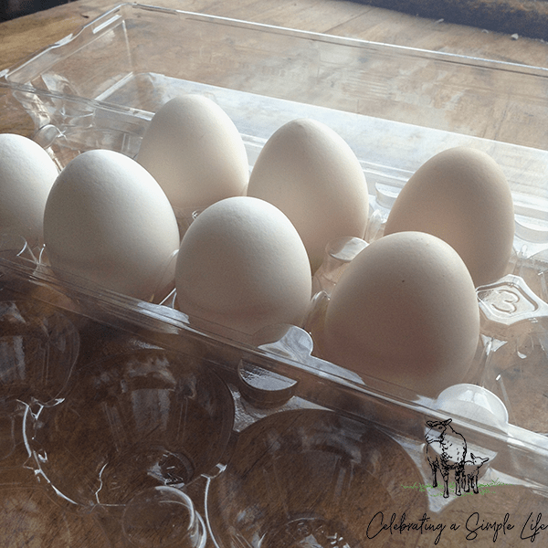how to store hatching eggs