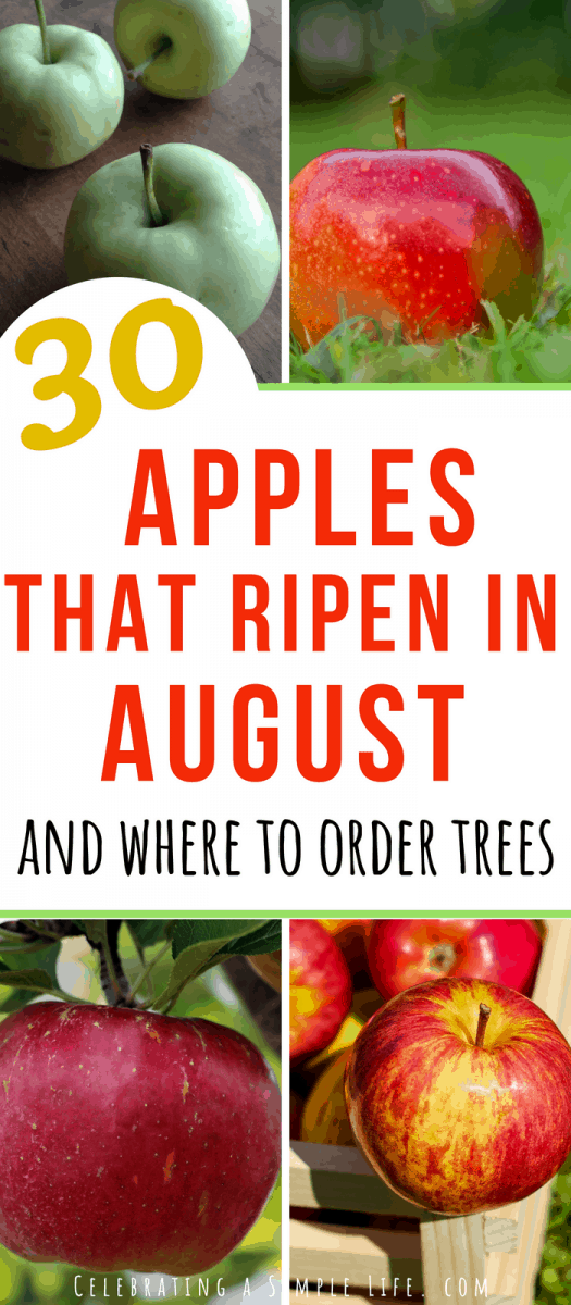 List of super early apple varieties that ripen in August
