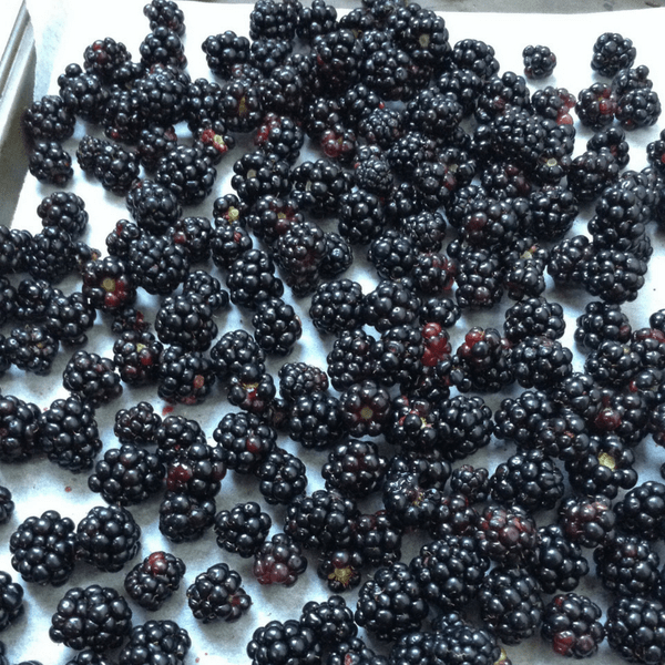 how to freeze blackberries at home