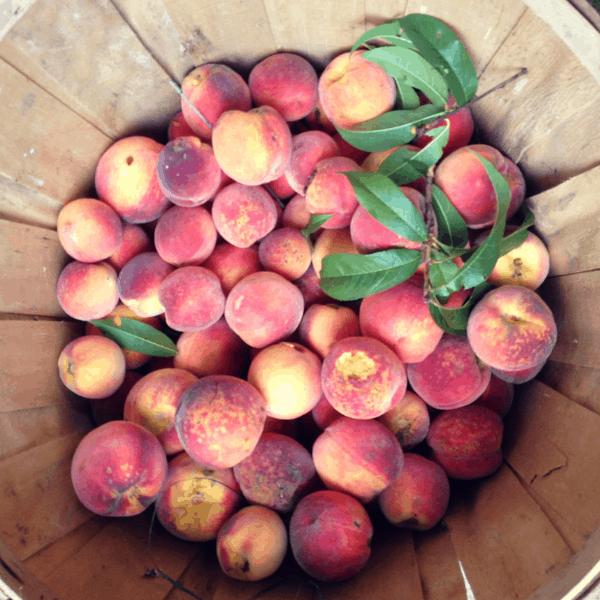 basket full of peaches