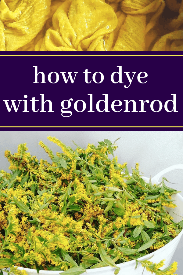 how to dye with goldenrod