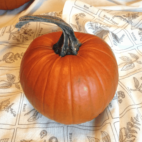 perfect pie pumpkin for making pumpkin puree in a pressure cooker