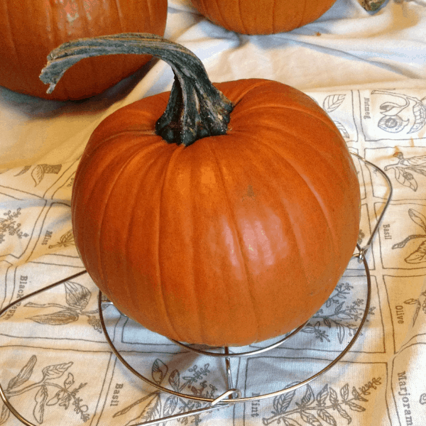 small pie pumpkin for cooking in instant pot