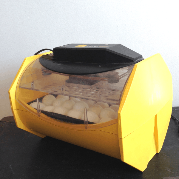 Home hatchery review of Brinsea Octagon ECO 20 incubator
