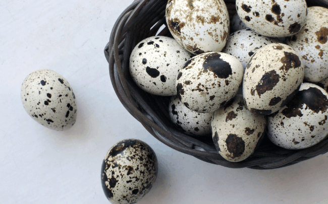 hatching quail eggs slider