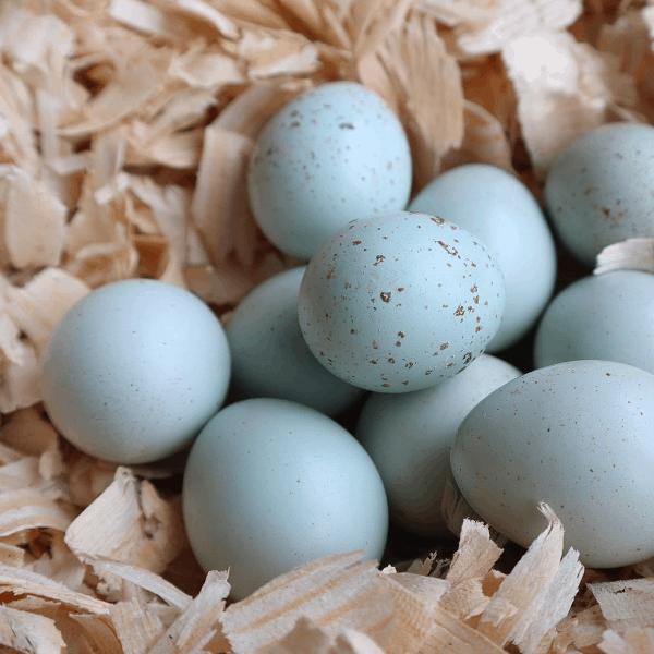 celadon quail eggs