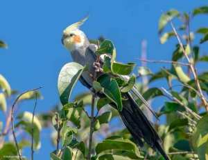 Rodrigo-aves-1-300x232 As aves em suas cores e tamanhos diversos iluminando a natureza em Salto do Jacuí. Vamos preservar nossas riquezas. Fotos: Rodrigo Rodrigues
