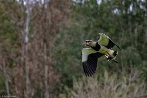 rodrigo-aves-2-300x200 As aves em suas cores e tamanhos diversos iluminando a natureza em Salto do Jacuí. Vamos preservar nossas riquezas. Fotos: Rodrigo Rodrigues