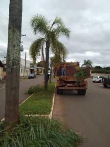PODA-COQUEIRO-225x300 Podas no centro da cidade