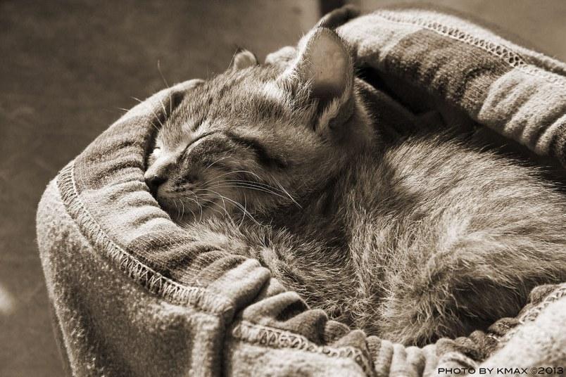 cat_MG_2160