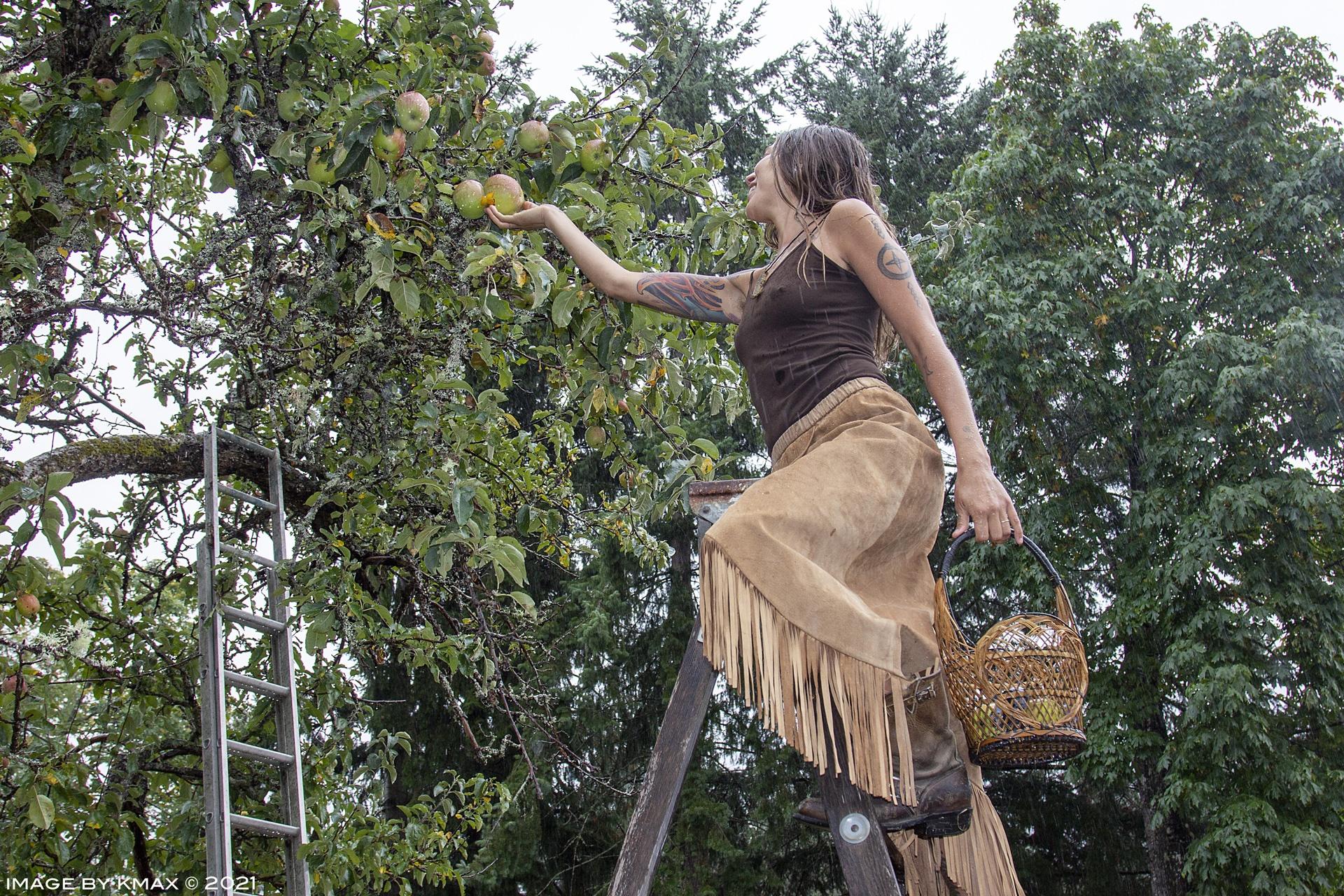 picking apples on Salt Spring Island