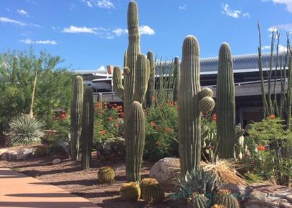 Tucson-airport